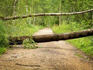 Kündigung der Risikolebensversicherung